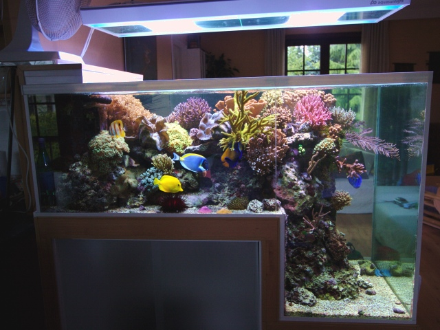 La technique de l 39 aquarium marin et r cifal for Aquarium marin complet