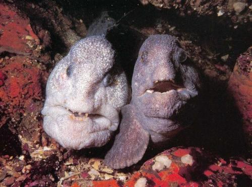 Achat Poisson D Aquarium les poissons d'aquarium marin