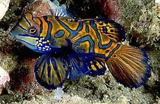 le plus beau poisson du monde