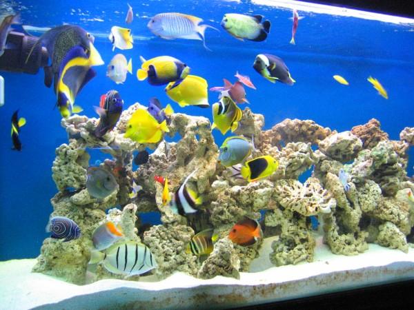 Les probl mes et les solutions dans l 39 aquarium r cifal for Bac a poisson 500l