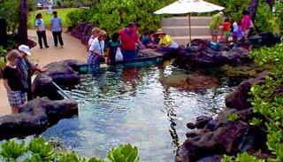 Le récif extérieur du Waikiki aquarium.