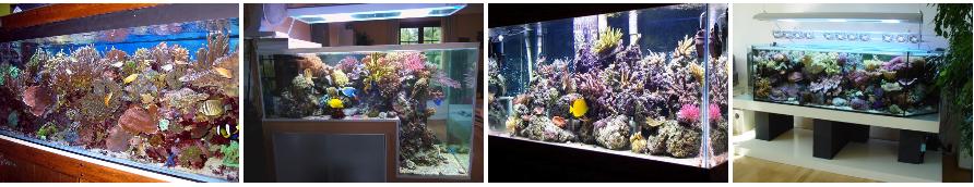 Quelques exemples de magnifiques aquariums récifaux.