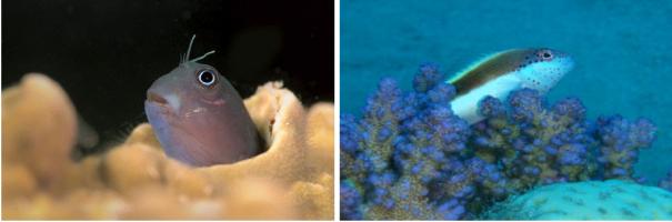 Les poissons partie 1 r cifal for Poisson rouge immobile fond aquarium